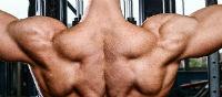 שרירי הכתפיים