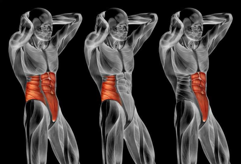 מודל תלת מימדי של שרירי הבטן של גבר בוגר